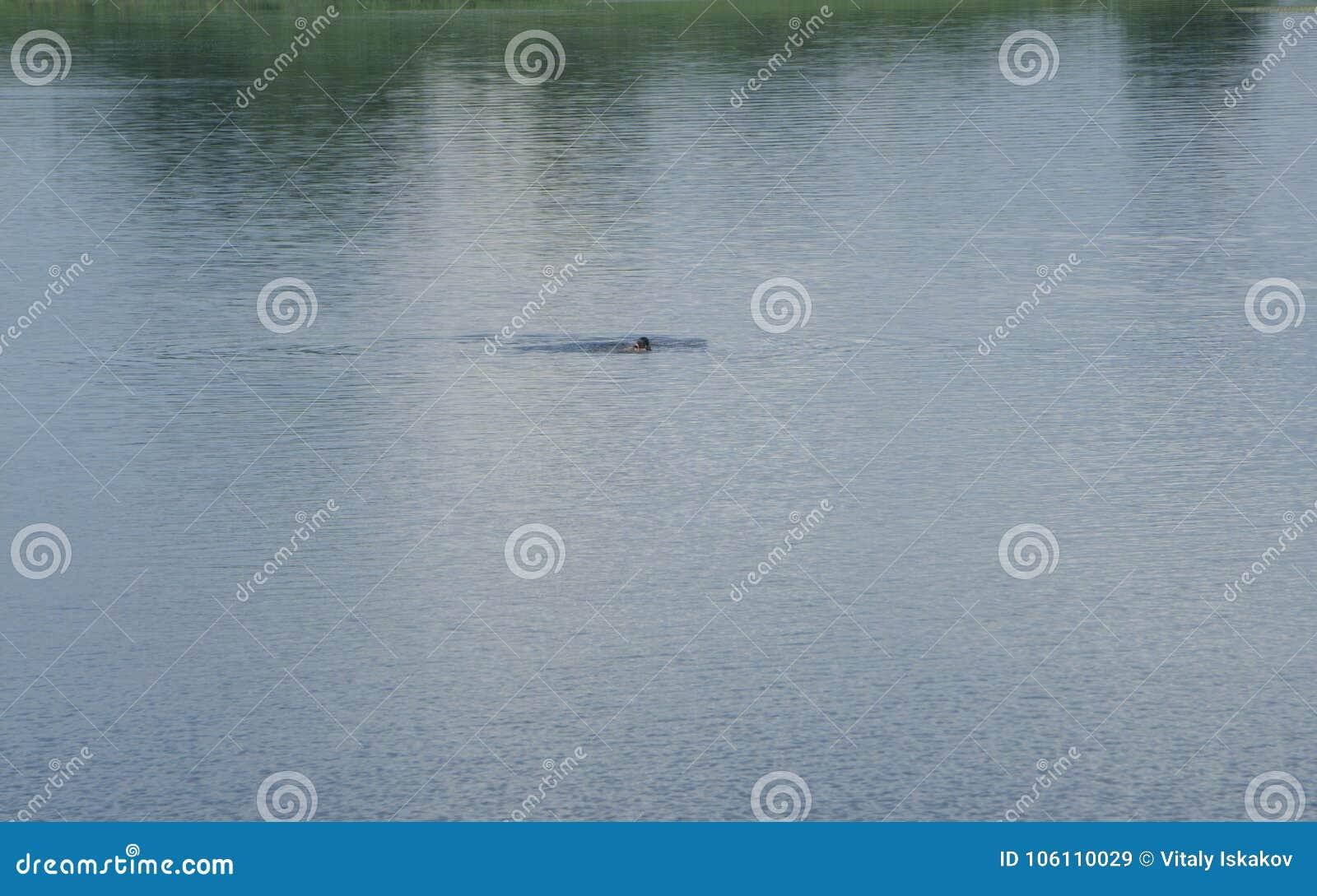 Schwimmer weit weg vom Ufer
