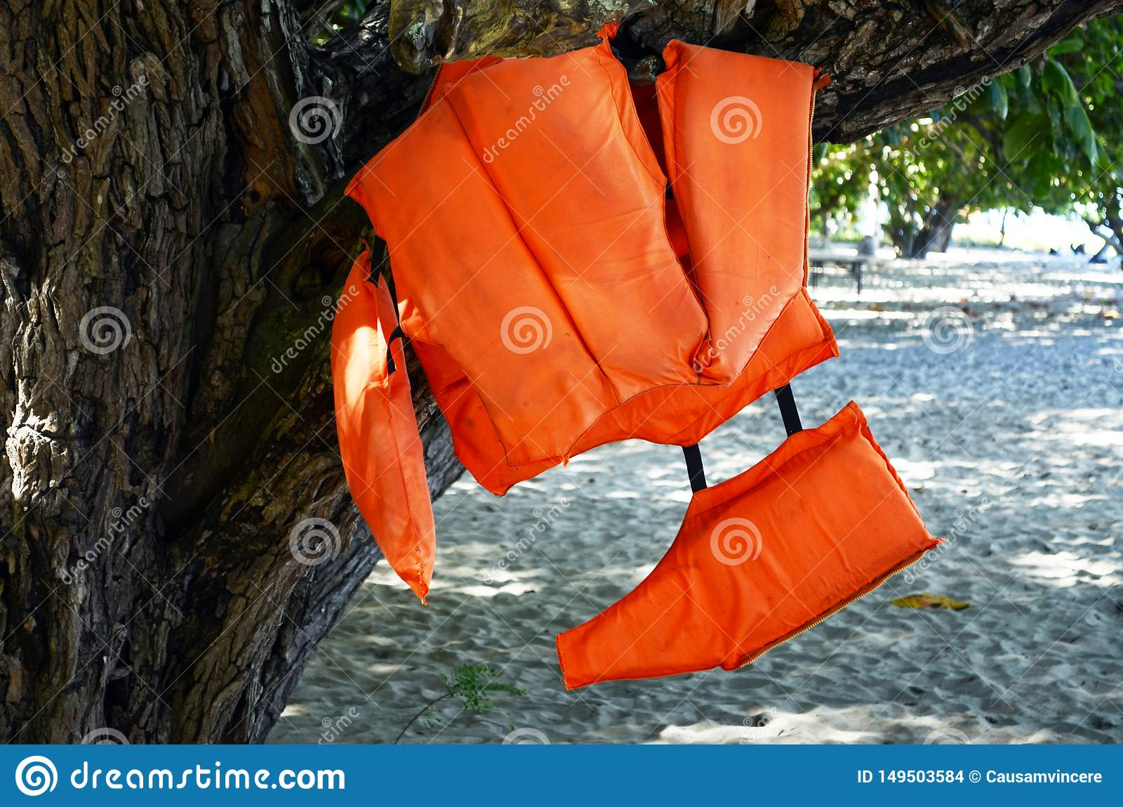 Schwimmwestejacke, die am Baum h?ngt