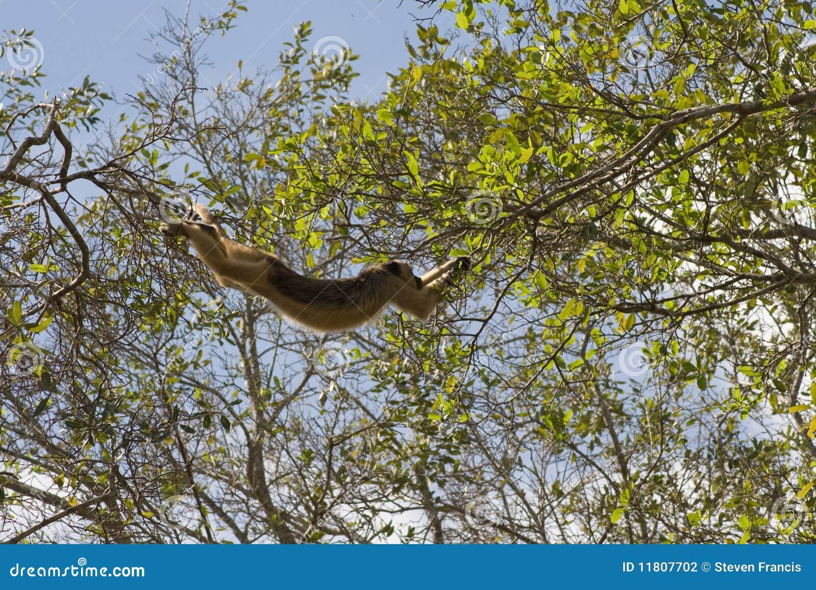 Schwingsummerfallhammer im pantanal, Brasilien