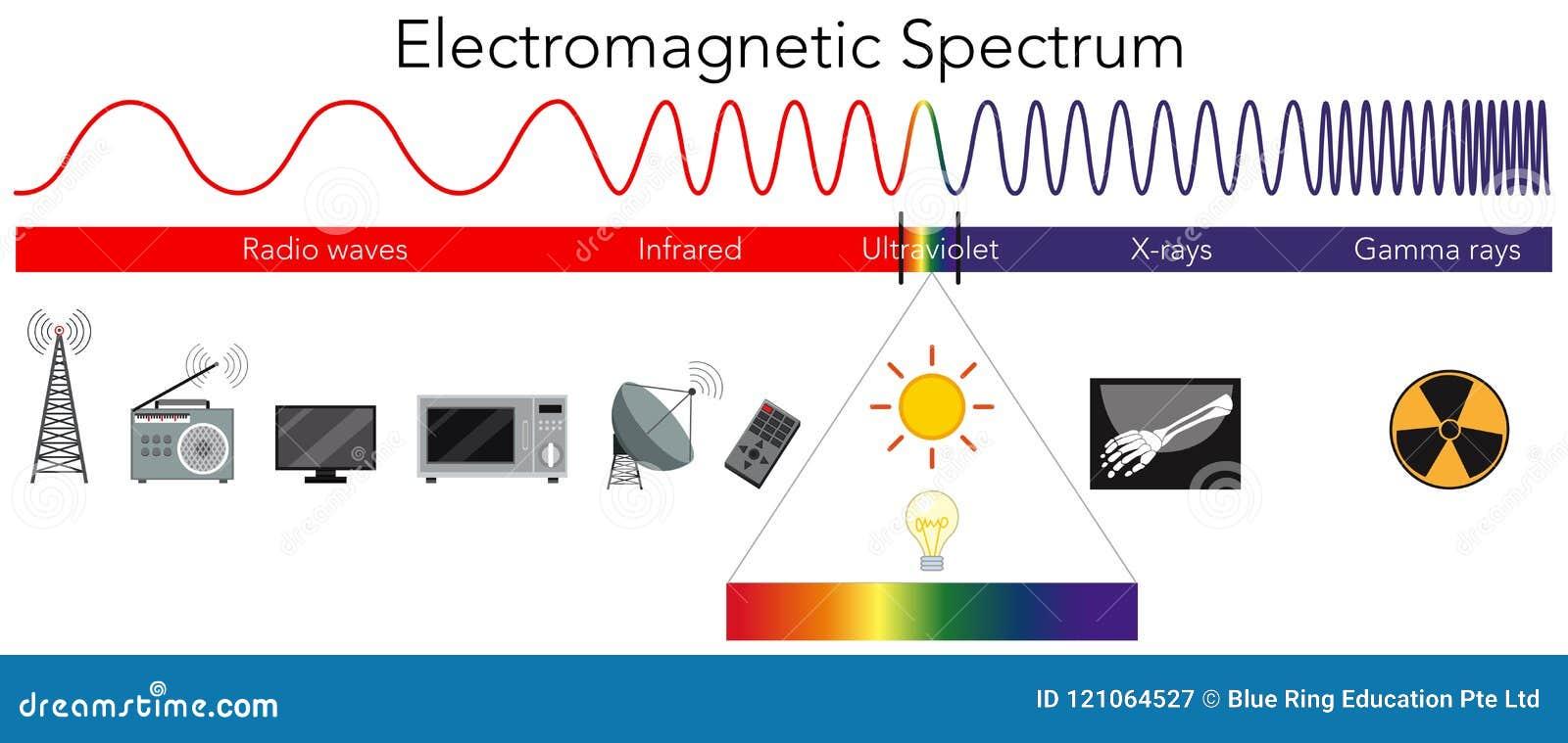Science Electromagnetic Spectrum Diagram Stock Vector