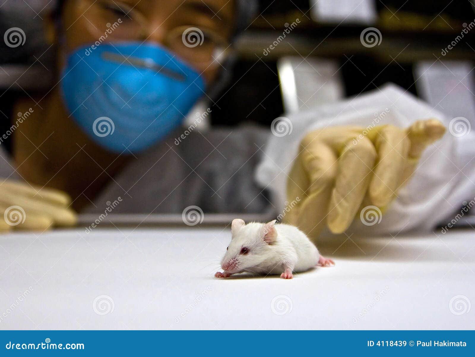 Scientifique avec la souris blanche