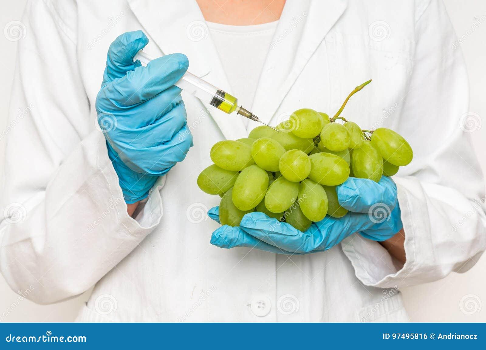 Scienziato OMG che inietta liquido dalla siringa nell uva