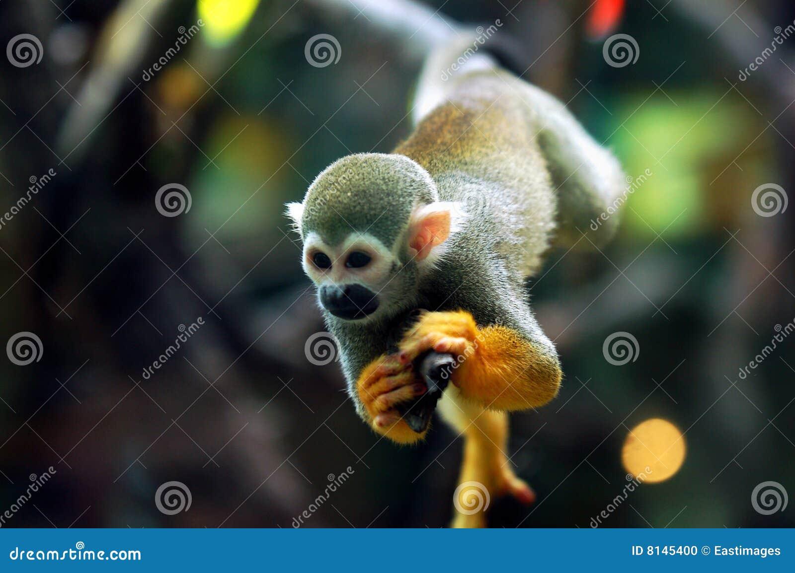 Scimmia del bambino