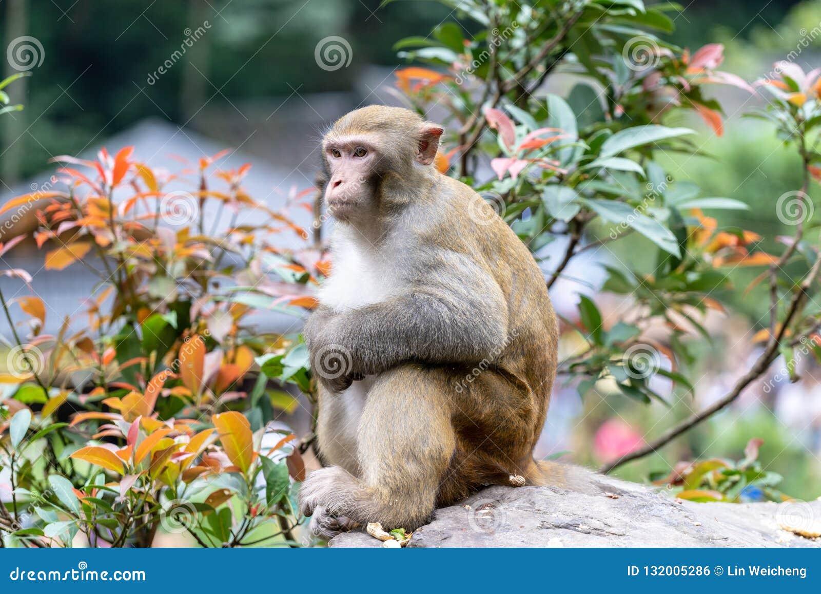 Scimmia di seduta molto sveglia