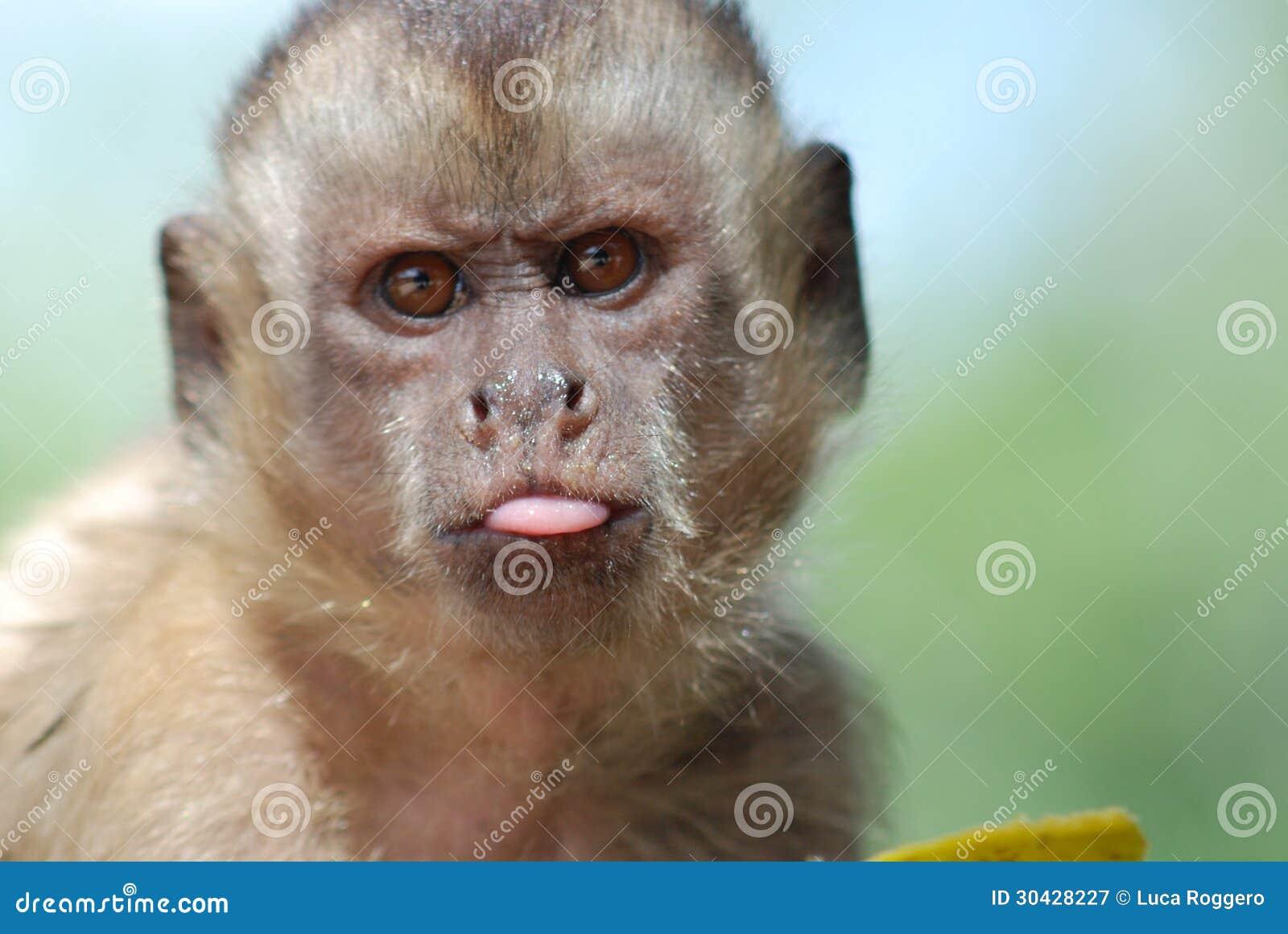 Scimmia divertente