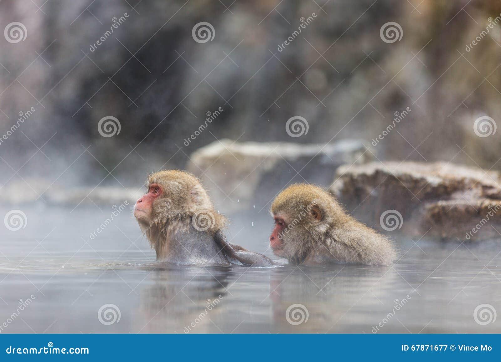 Scimmia in un onsen