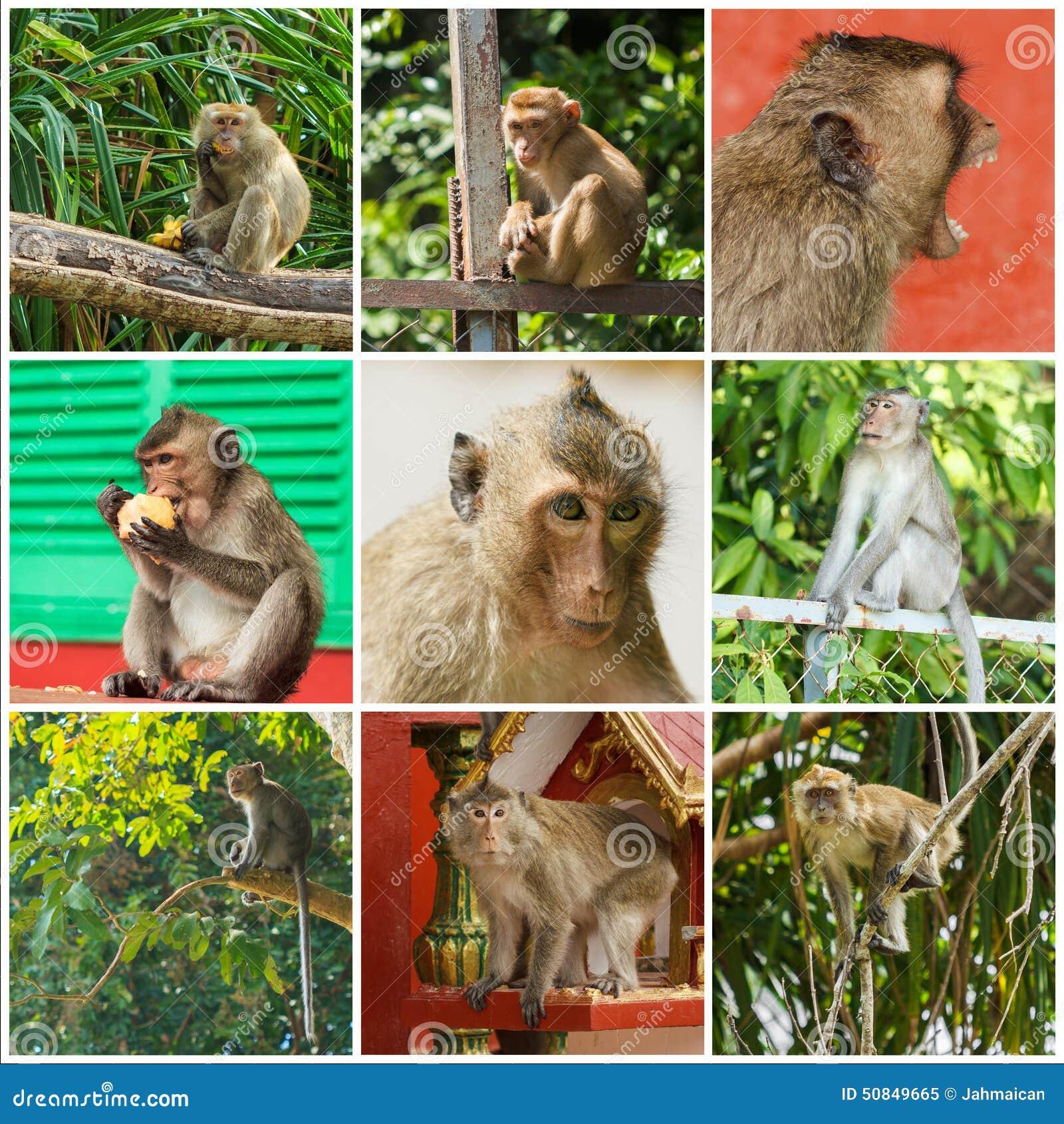 Scimmie sveglie