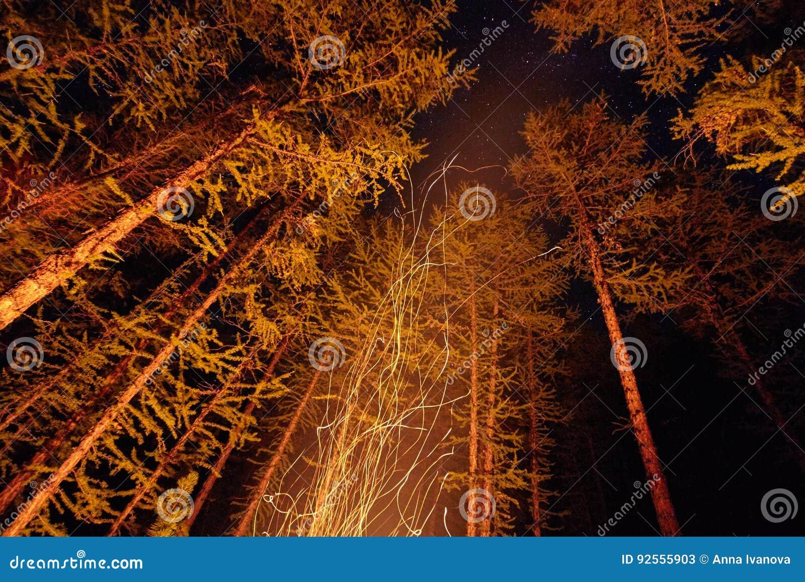 Scintille a partire da una notte del falò nel legno che vola nel cielo Fuoco nel legno sotto un cielo stellato, gli alberi illumi