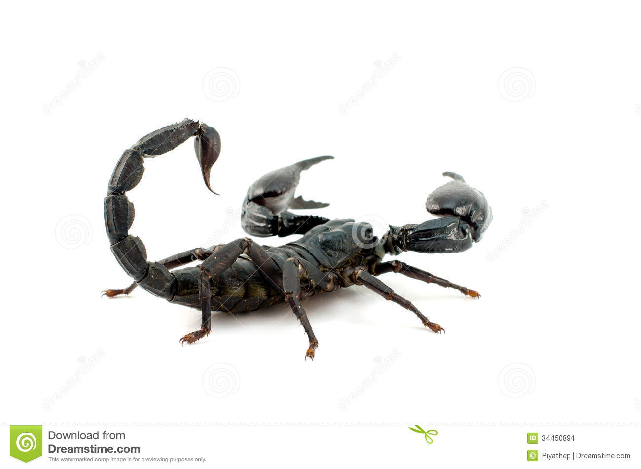 Scorpion with White Background