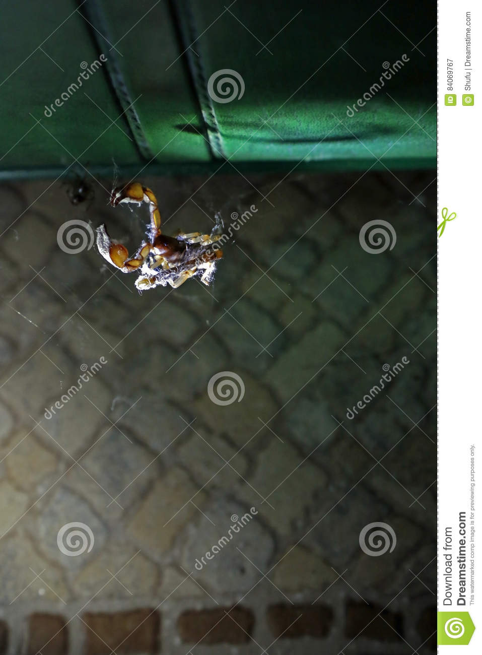 Scorpion in a spider`s web