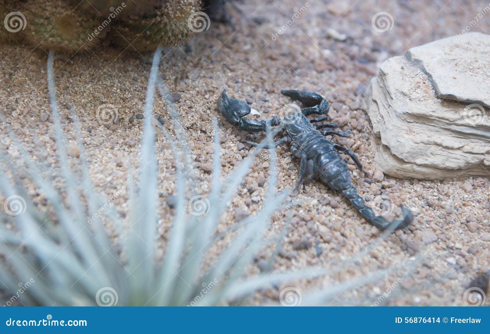 Scorpione sulla sabbia