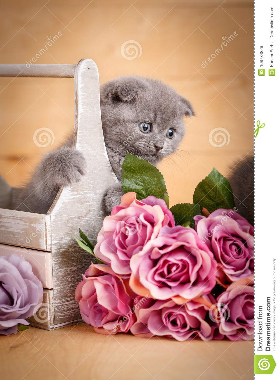 Scottish Fold Cat In Decorative Wooden Box Near Bouquet Of Flowers