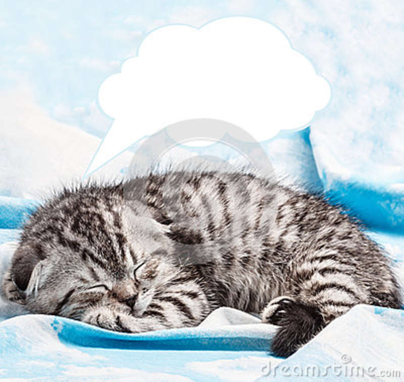 Scottish Fold kitten is sleeping and dreaming