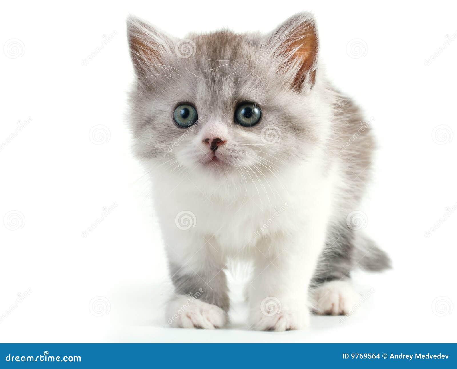 Pussy Cat Photo 21