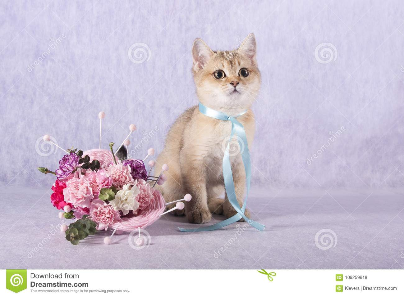 Scottish Straight Kitten Sitting Next To A Bouquet Of Flowers Stock ...