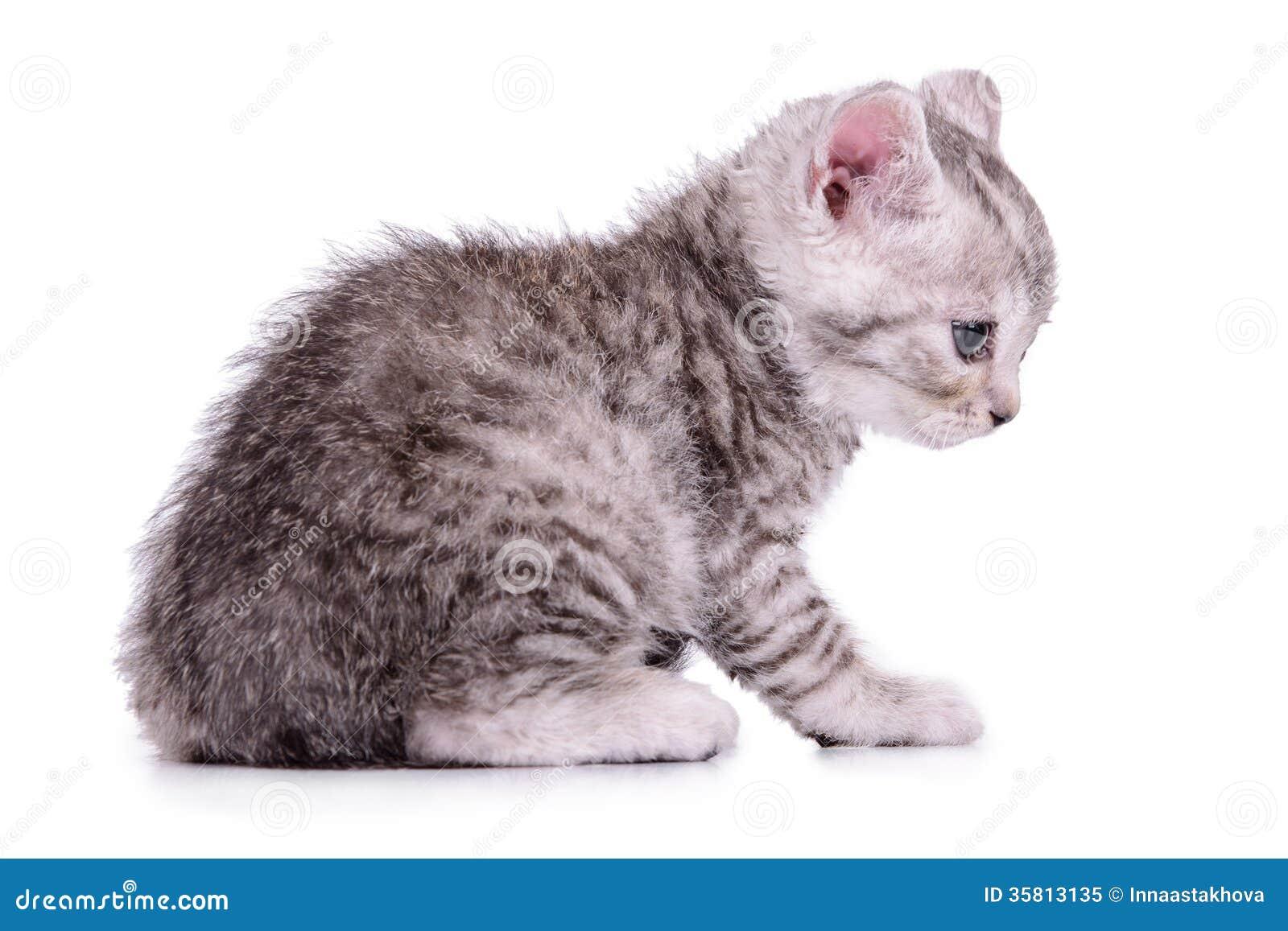 cat d3 dozer for sale