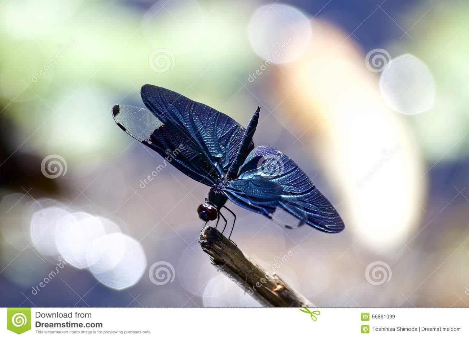 Scrematrice della farfalla