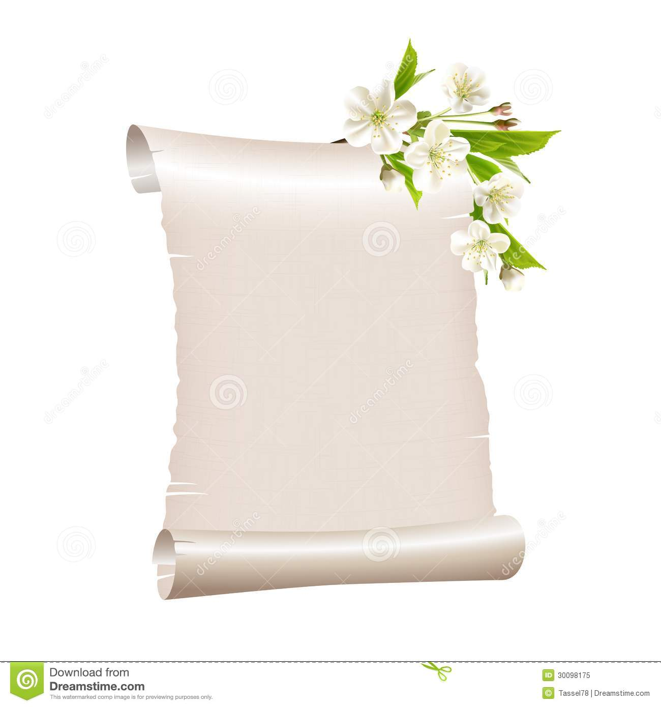 scroll blank paper with blossoming cherry branch stock
