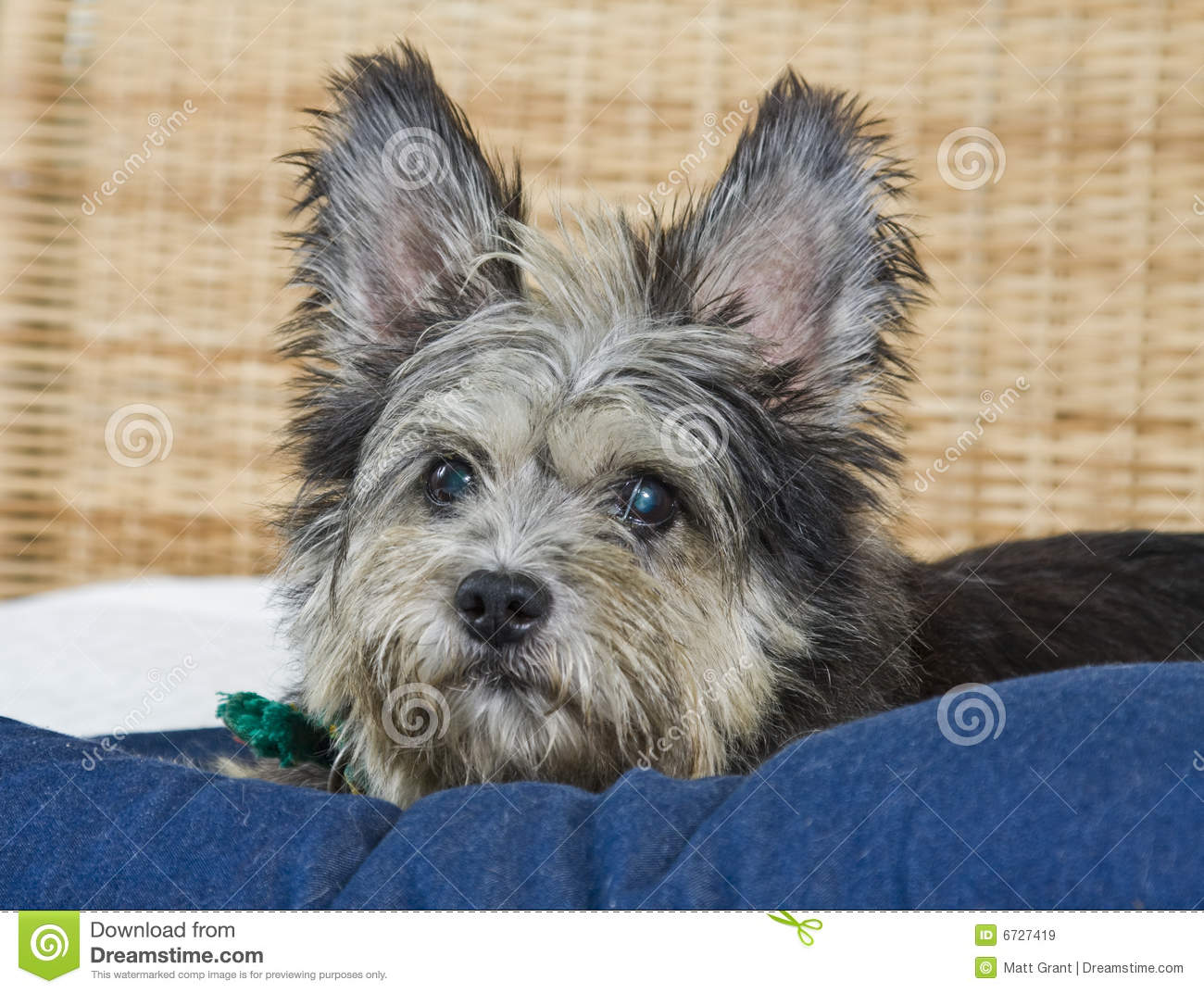 Dog Breeds And