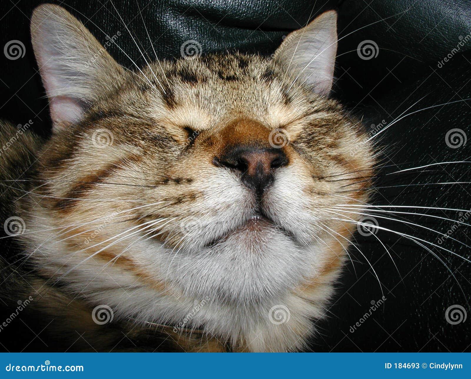 Scrunched encima del primer del gato