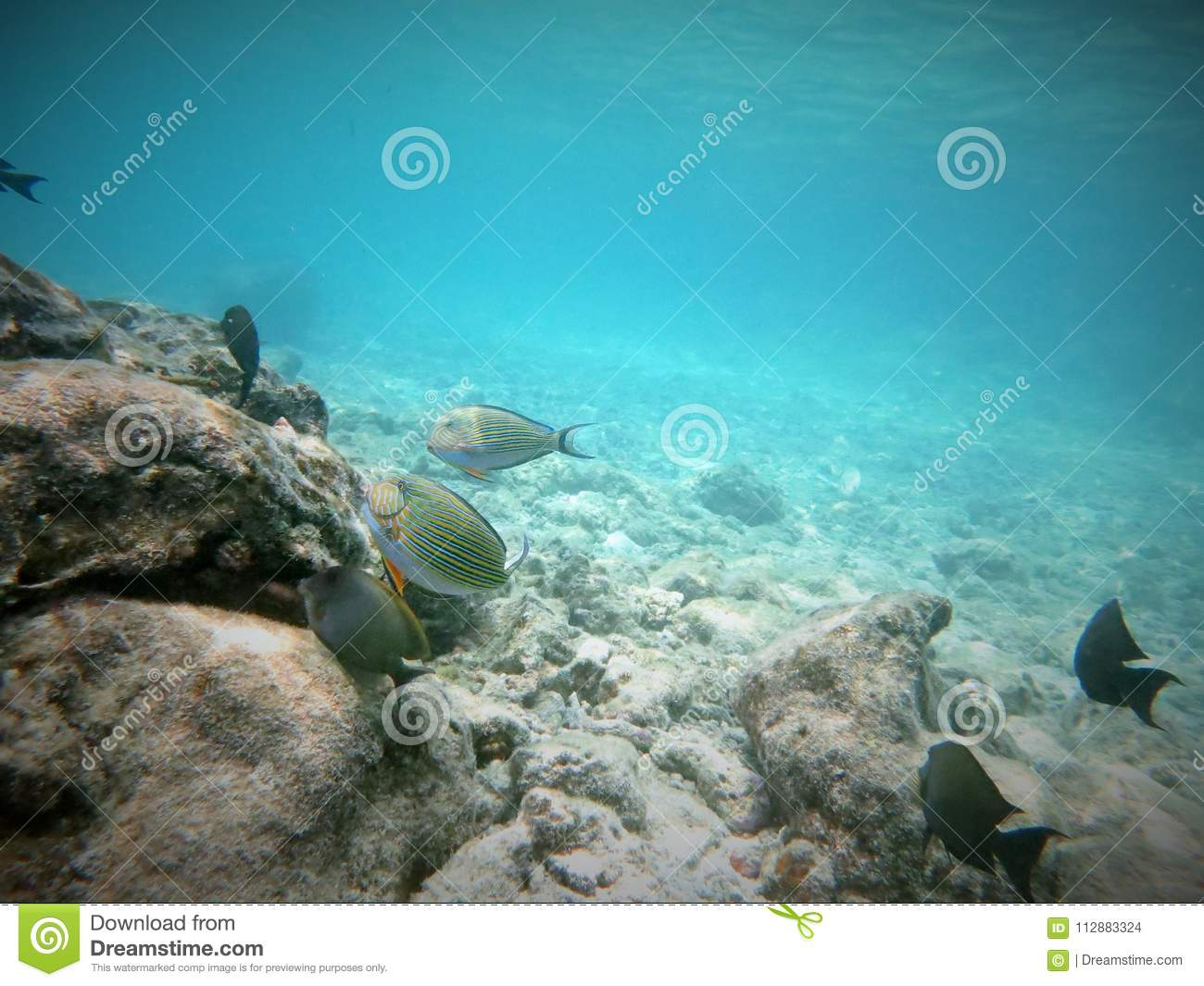 Real underwater world Beautiful Mermaid Scuba Diving In Maldives Had Lot Of Fun Its Real Nice To See Underwater World With Own Eye Daily Mail Scuba Diving In Maldives Stock Photo Image Of Natural 112883324