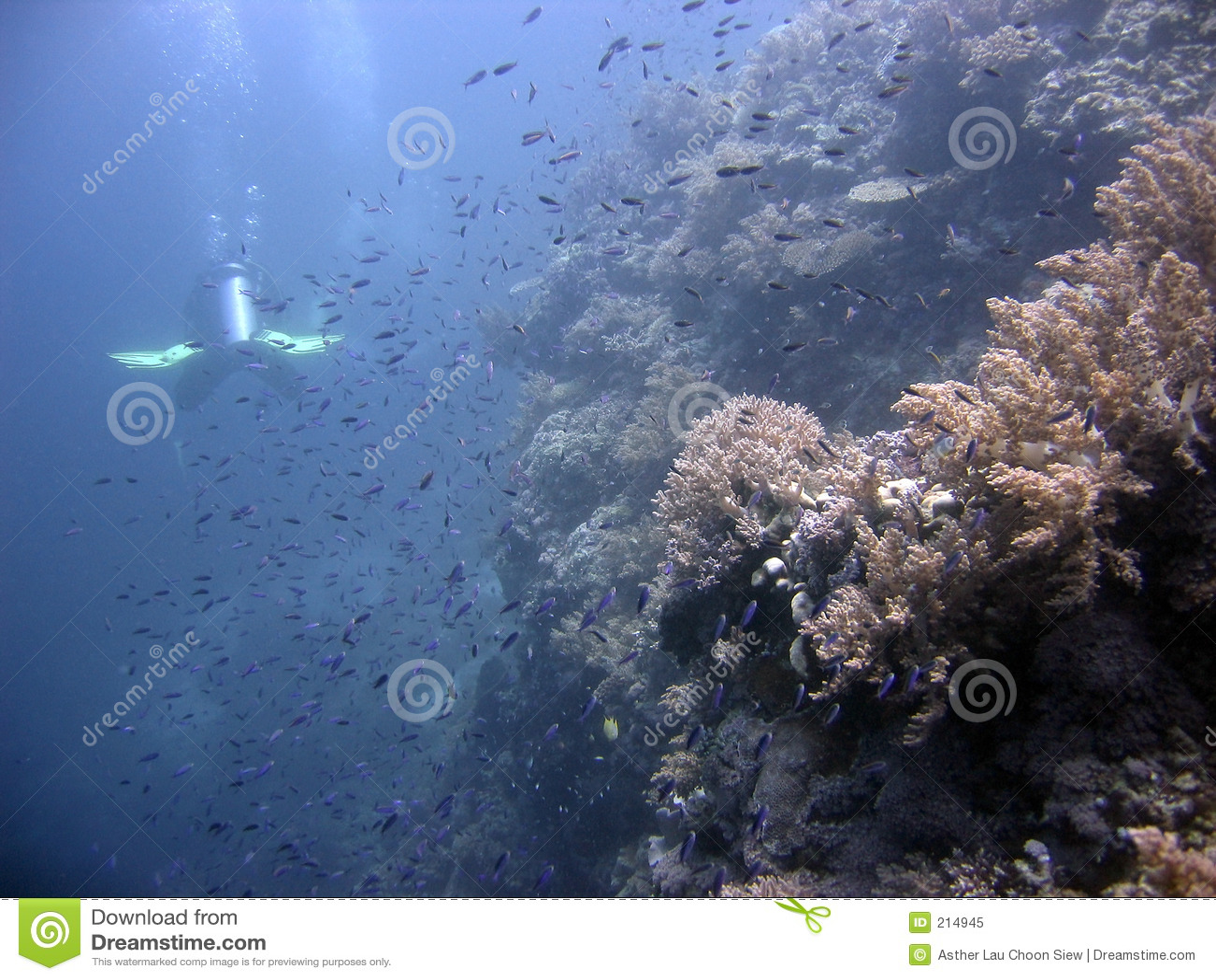 Scuba för koralldykarerev
