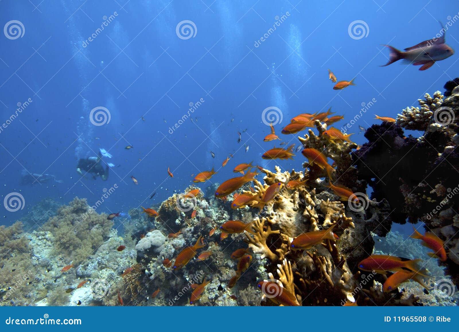 Scuba-Operatore subacqueo subacqueo in corallo-scogliera tropicale