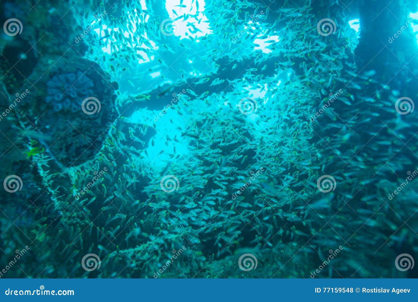 Scuola del naufragio interno del pesce di vetro