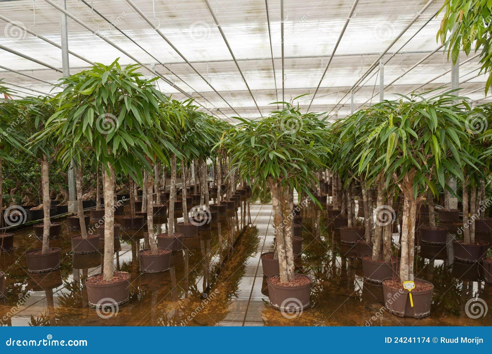 Scuola materna olandese della pianta di hydroculture for Architettura olandese