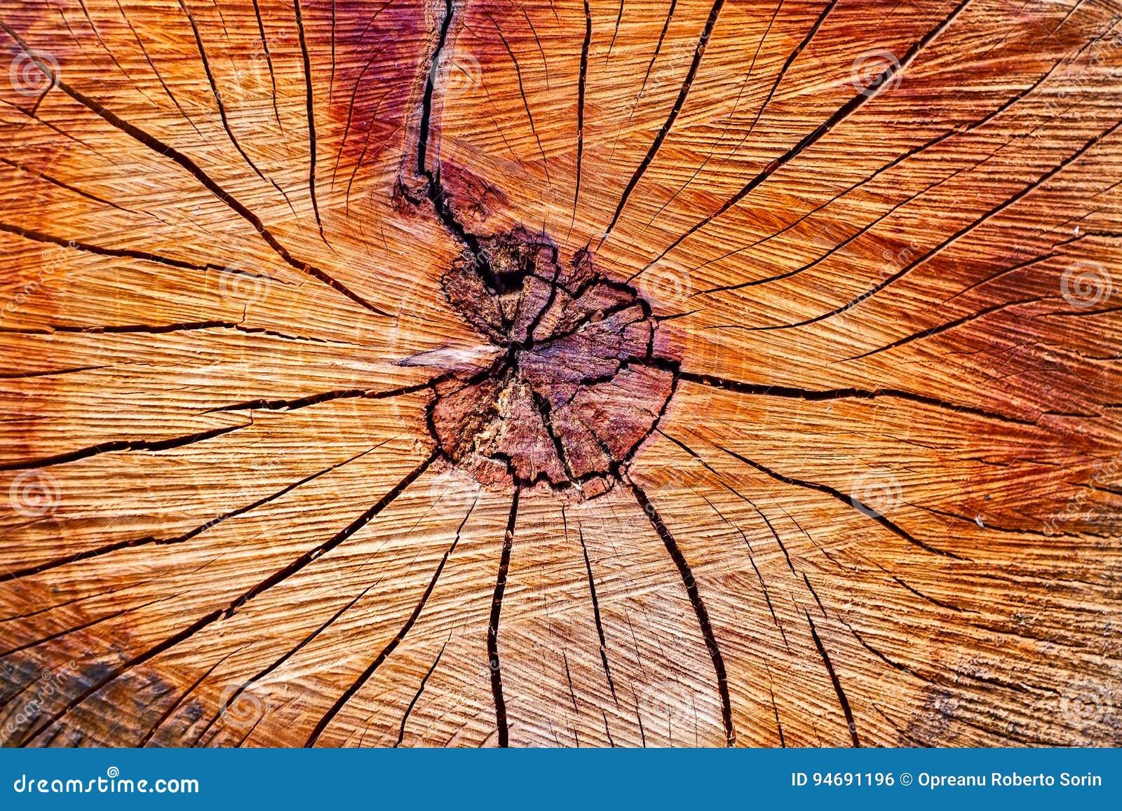 Seção transversal de um tronco de árvore
