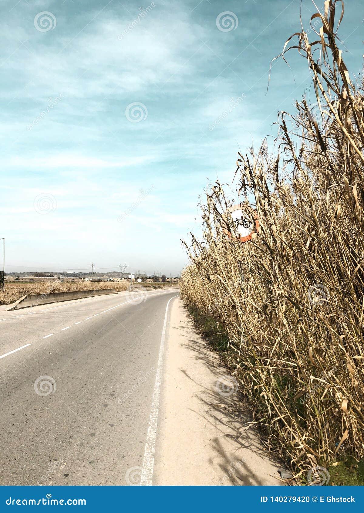 Señal de tráfico de una bici en un campo de maíz un día claro