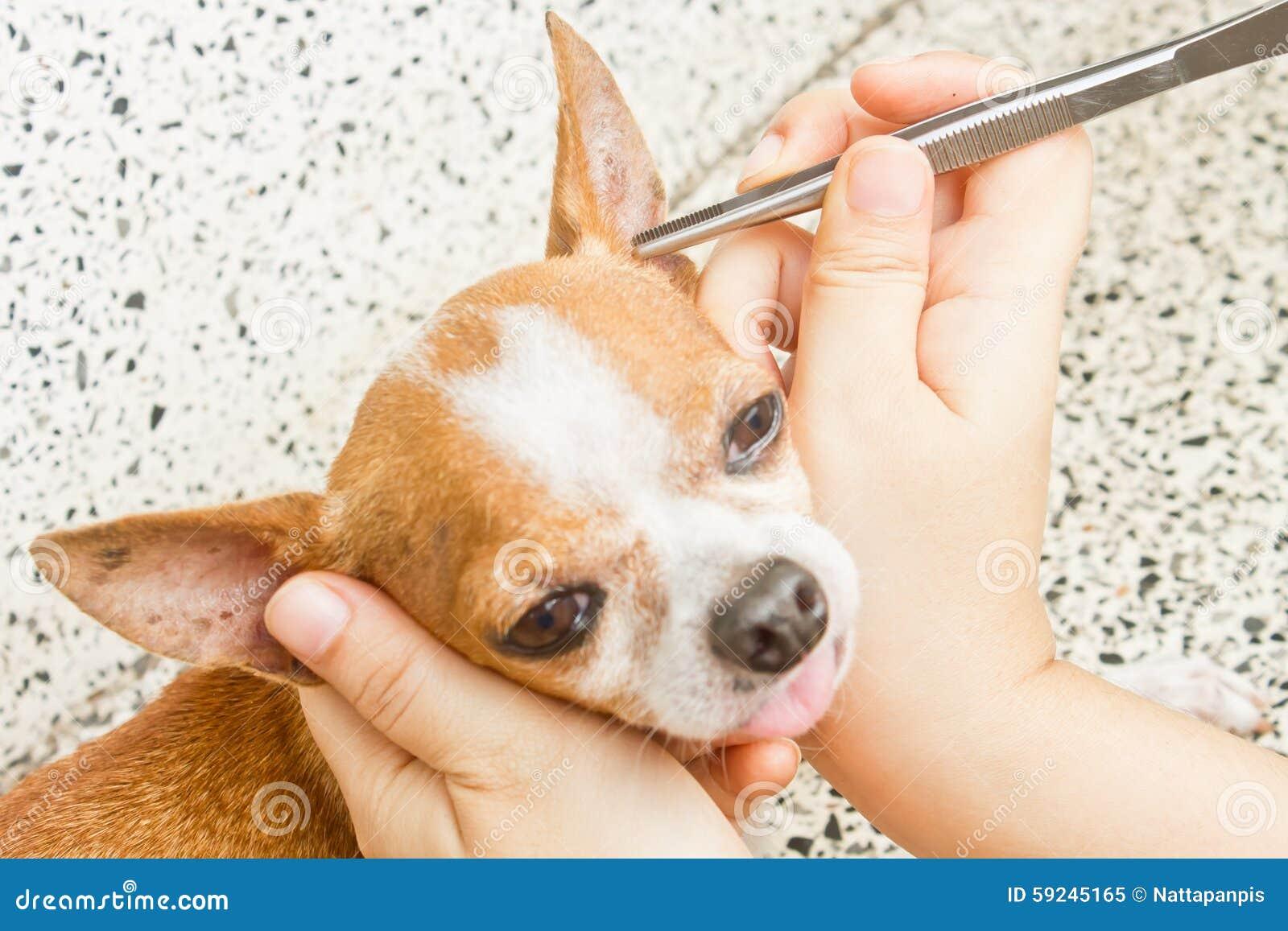 Señal del retiro del perro