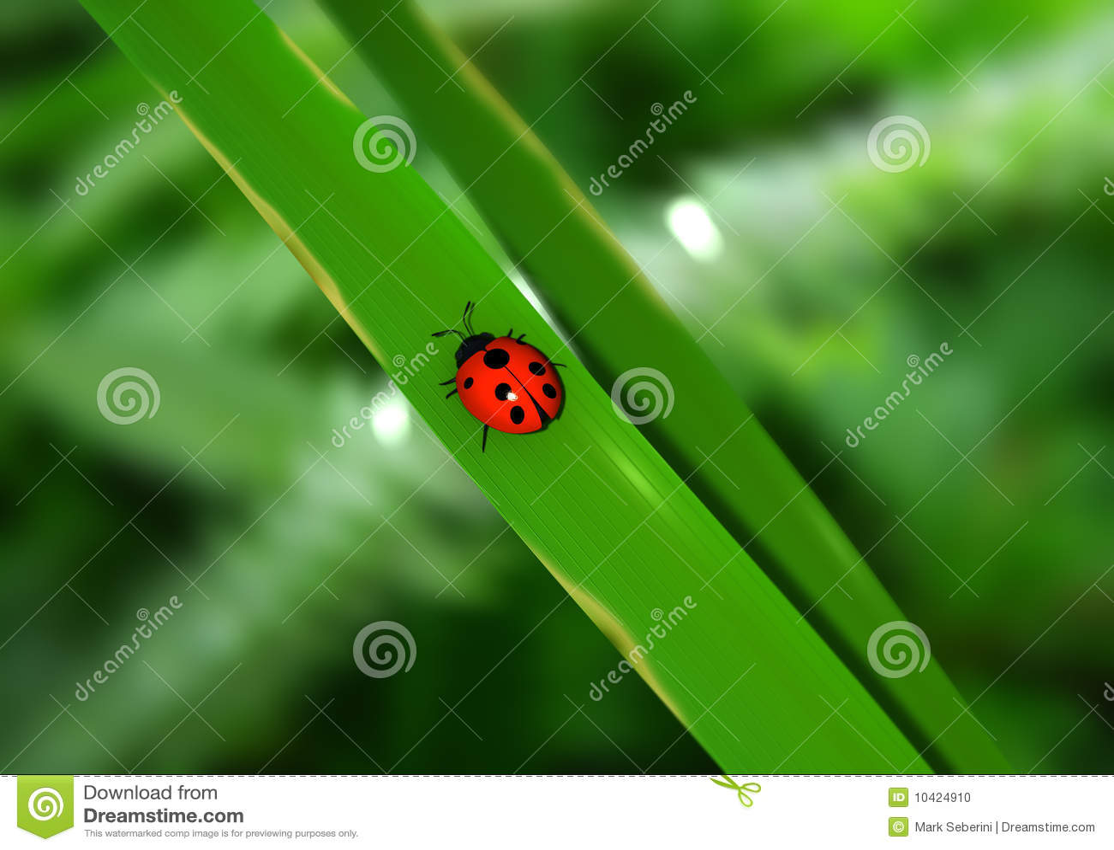 Señora Bug
