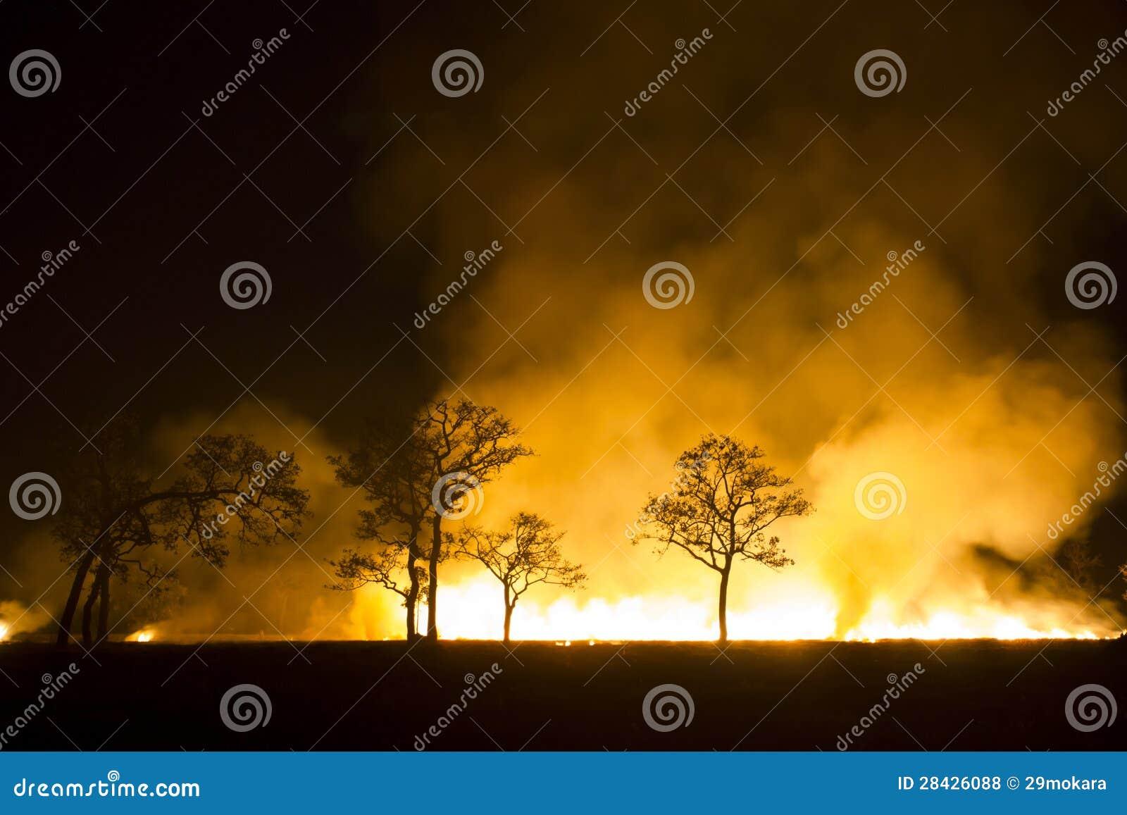 Se destruye el ecosistema ardiente del bosque del incendio fuera de control
