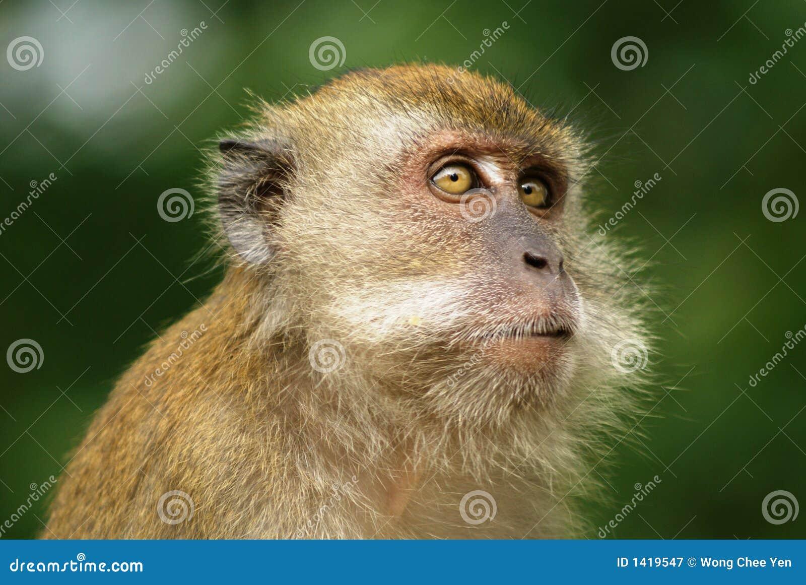 Se macaqueapan