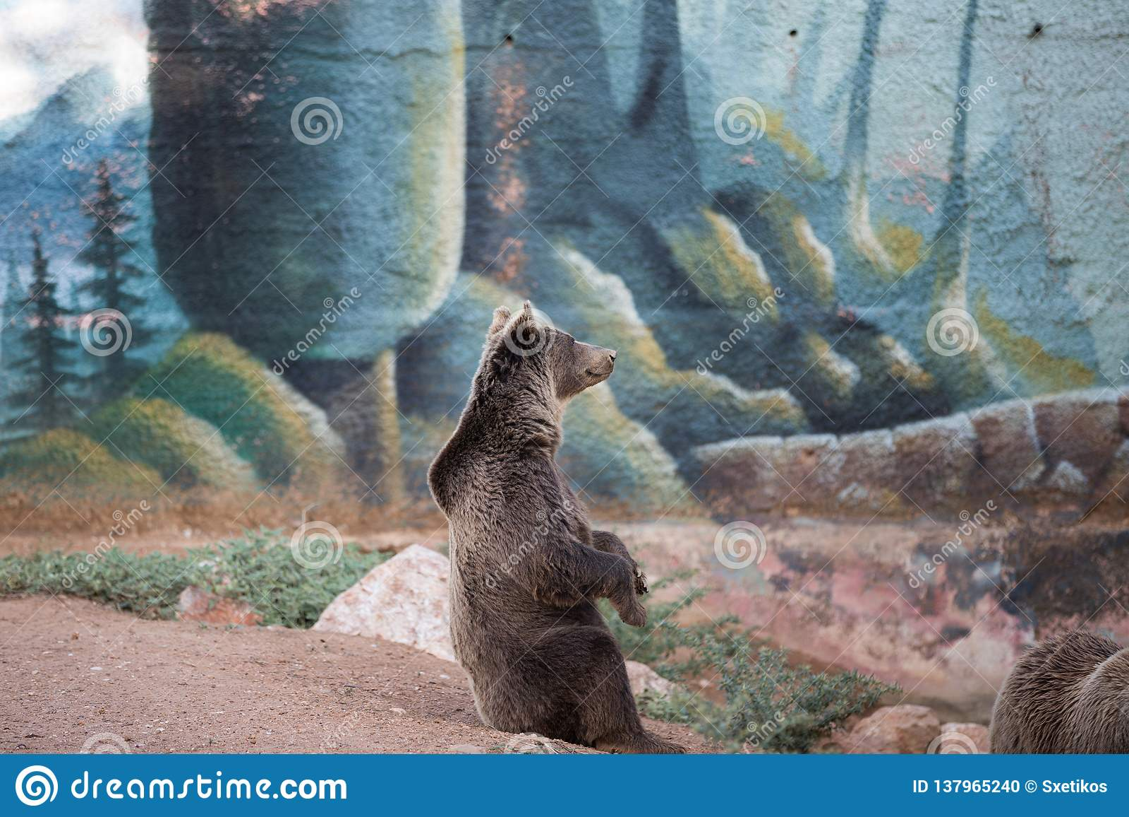 Se reposer d ours brun