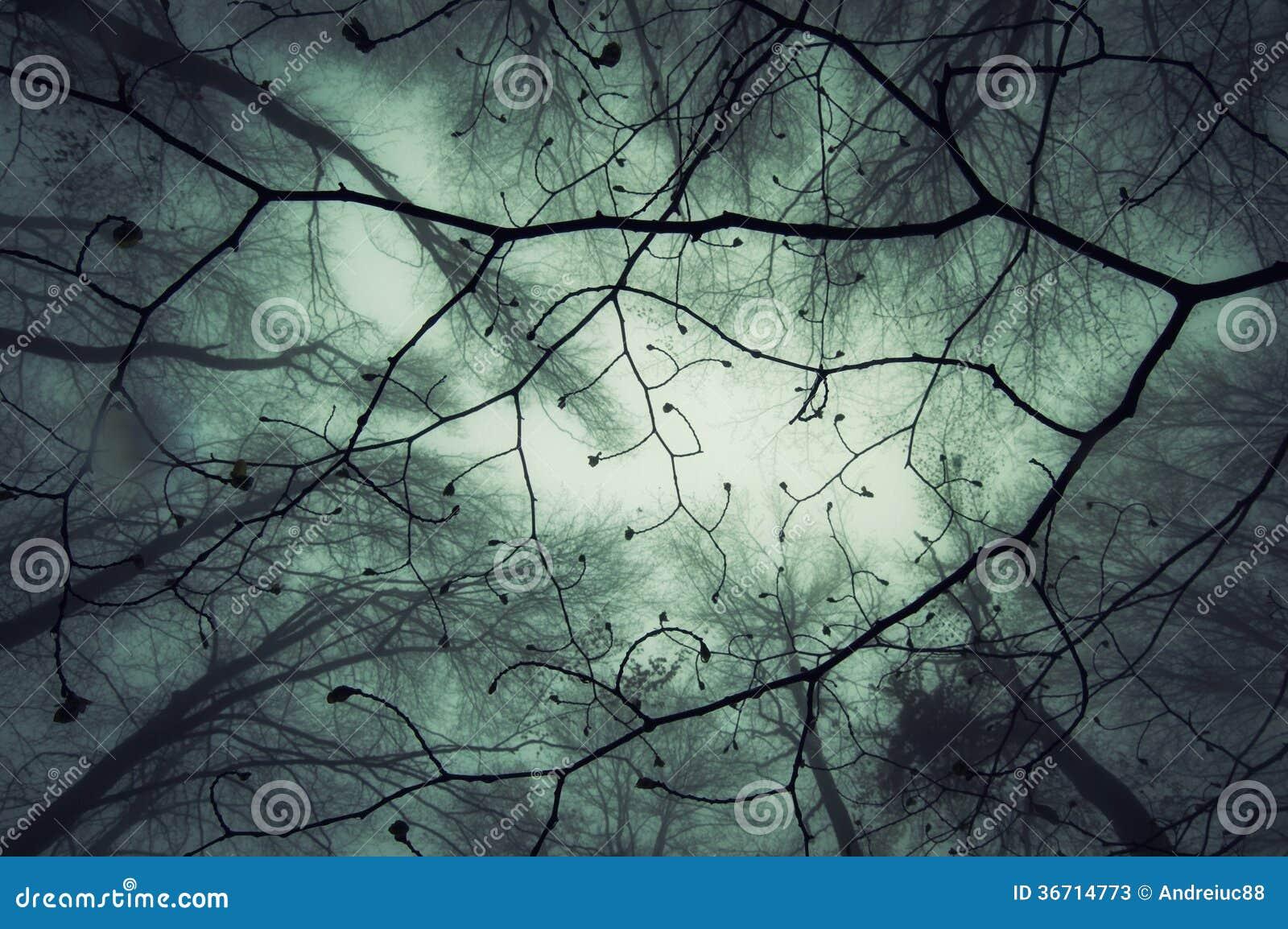 Se upp på filialer i en mystisk förtrollad skog med dimma