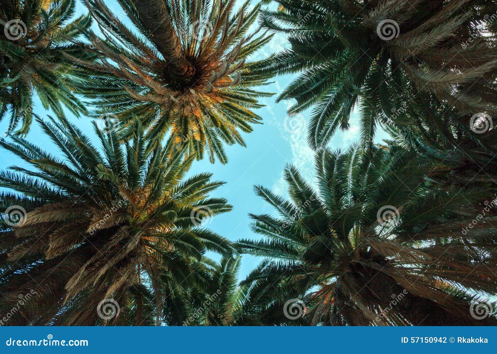 Palm fjädrar dating