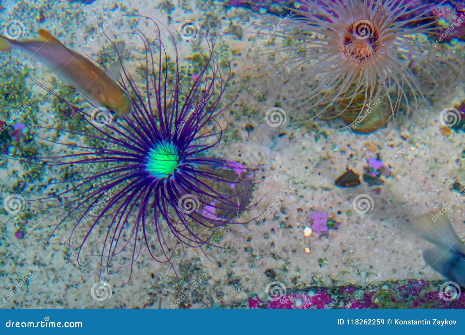 Sea Anemone Looks A Lot Like Flower Marine Animals On The Sandy Seabed