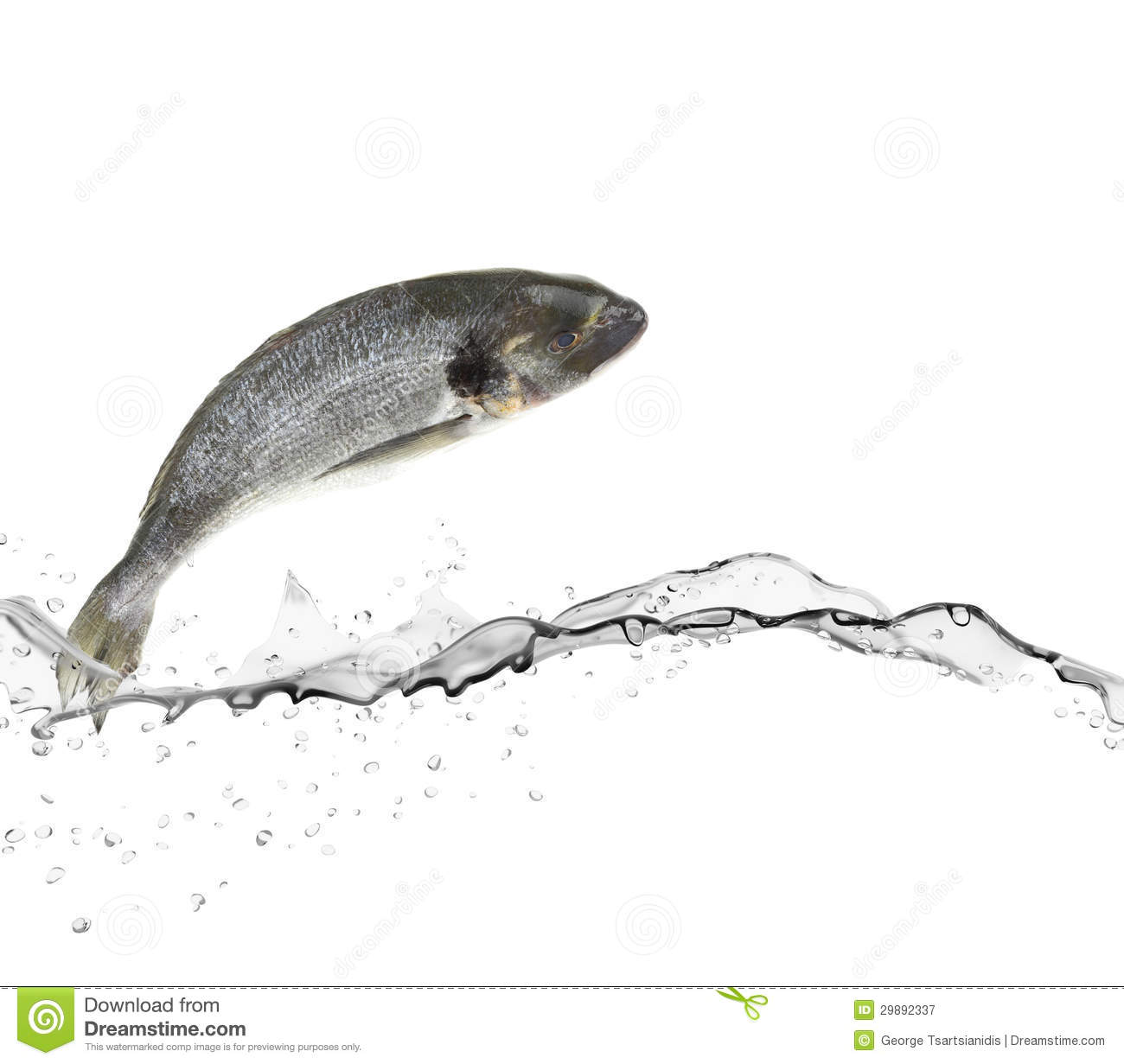Sea bass fish royalty free stock photography image 29892337 for Dream about fish out of water