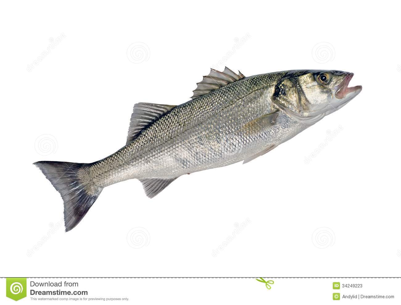 Sea bass fish stock photos image 34249223 for Silver bass fish