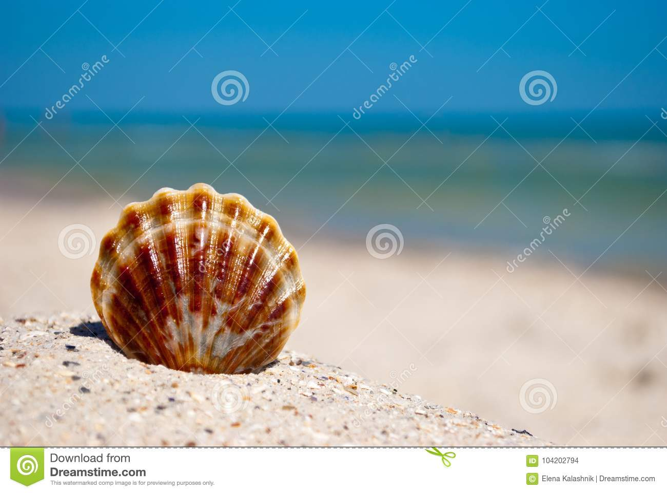 Shell white brown lies on the sand on a background of blue sea and blue sky summer vacation