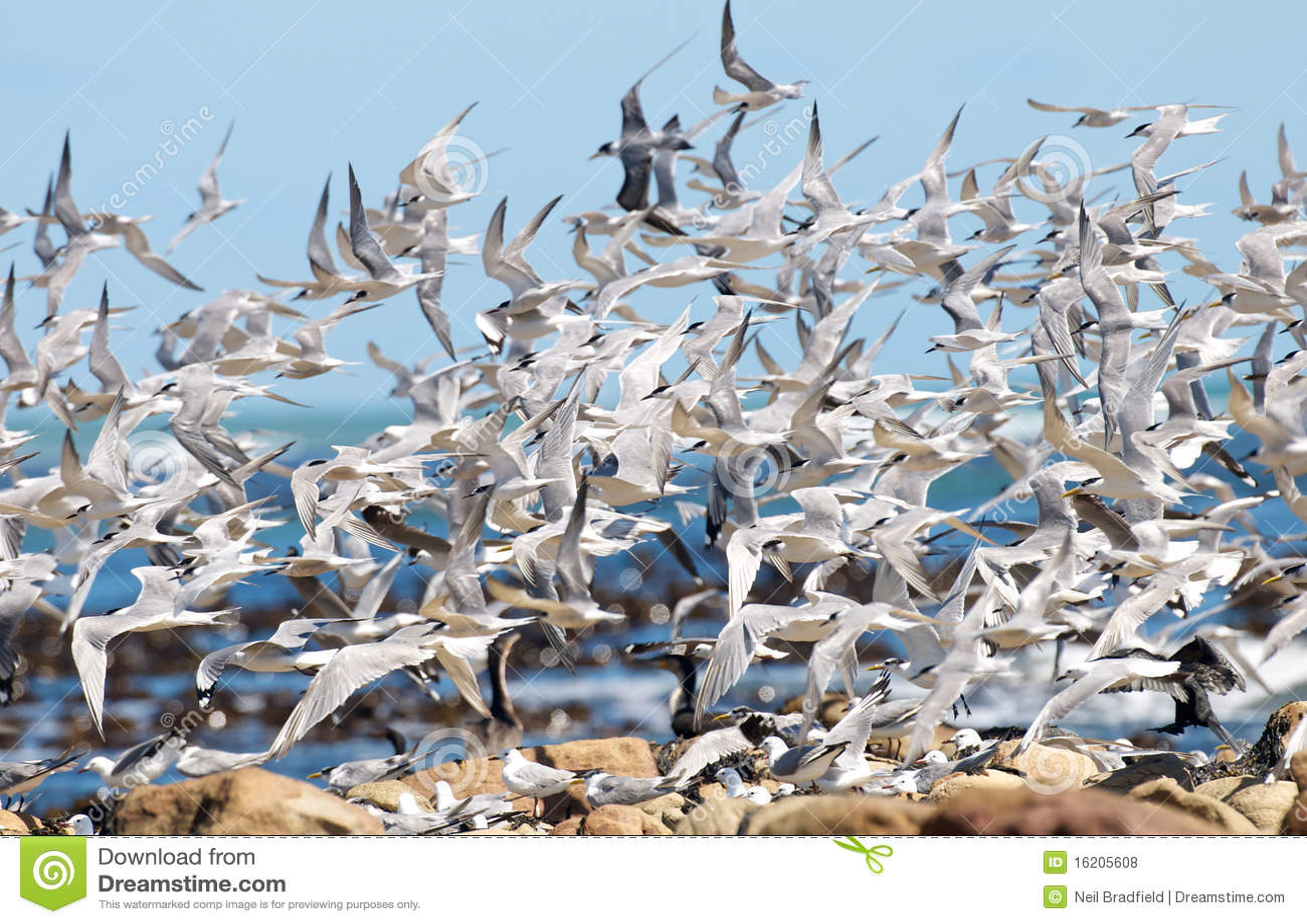 Sea Bird Chaos