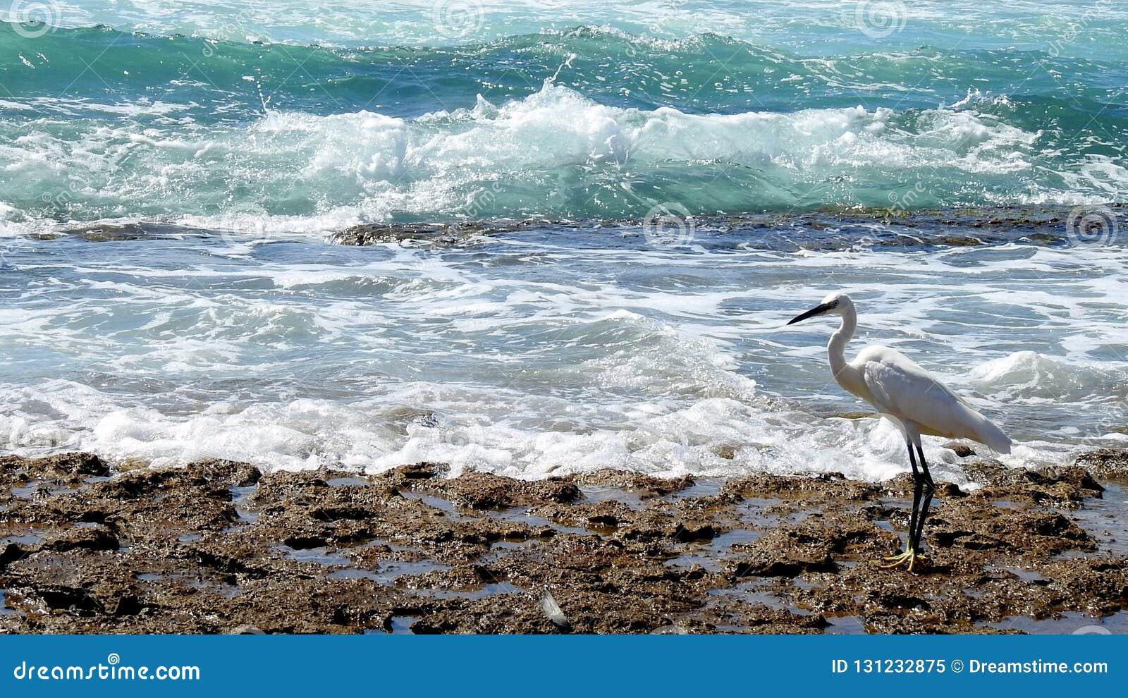 Sea bird in summer