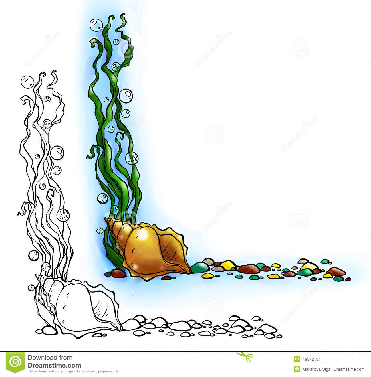 sea border with shell and algae stock photo image 48372131 Photosynthesis Diagram Water Clip Art