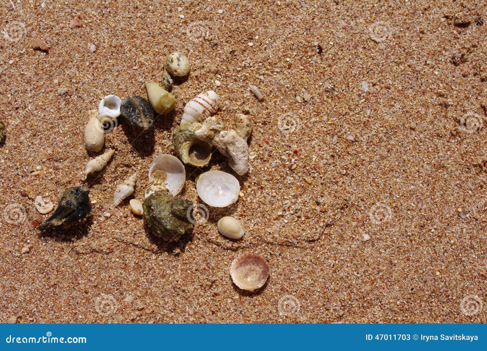 Sea cockleshells on sand