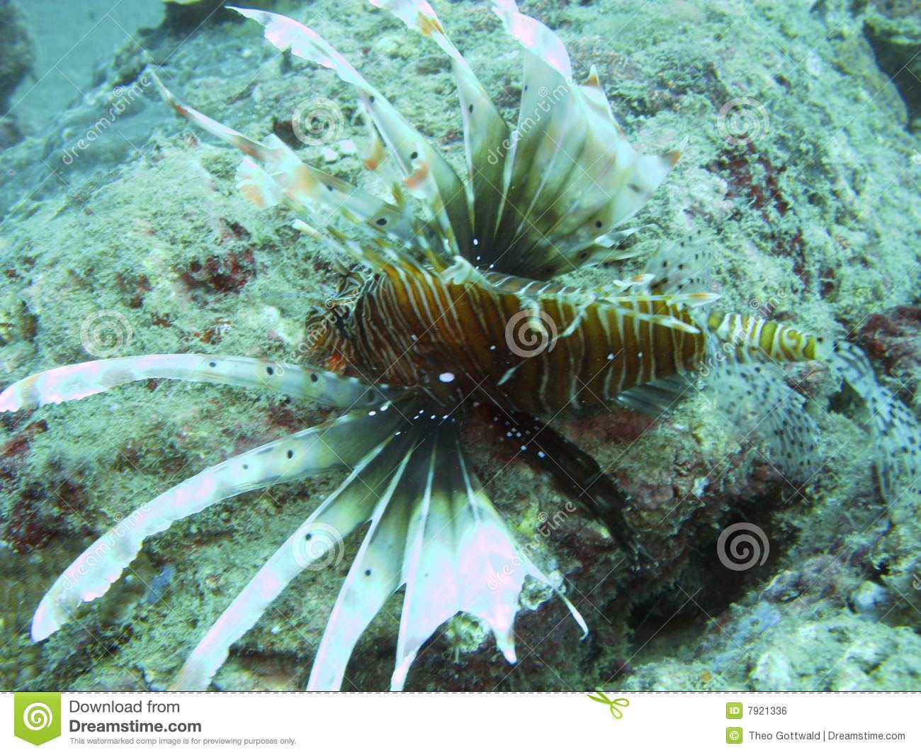 sea creature and coral reef royalty free stock image sea urchin clipart black and white Octopus Clip Art