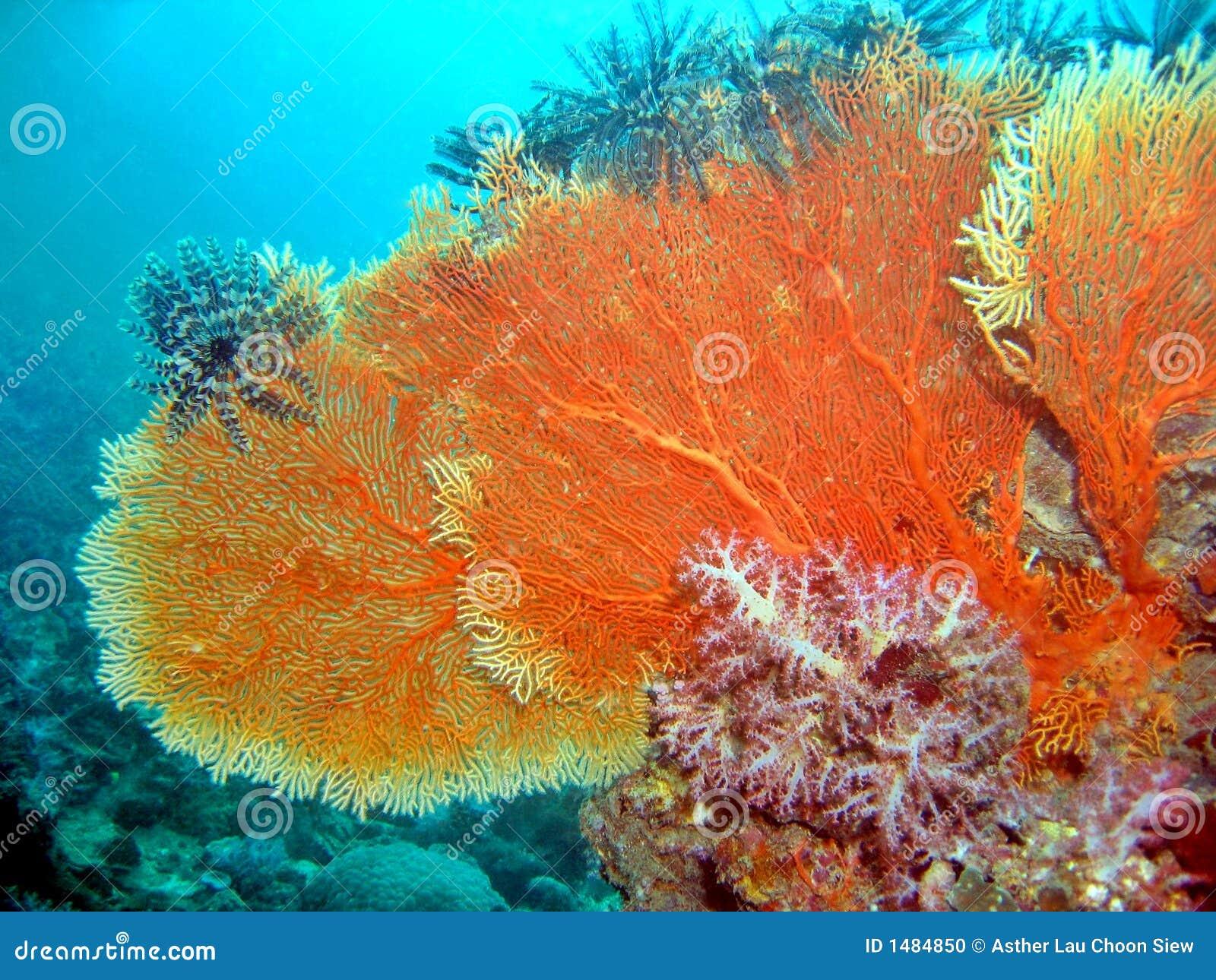 Sea fan coral stock photo image of aquatic seascape 1484850 sea fan coral publicscrutiny Images