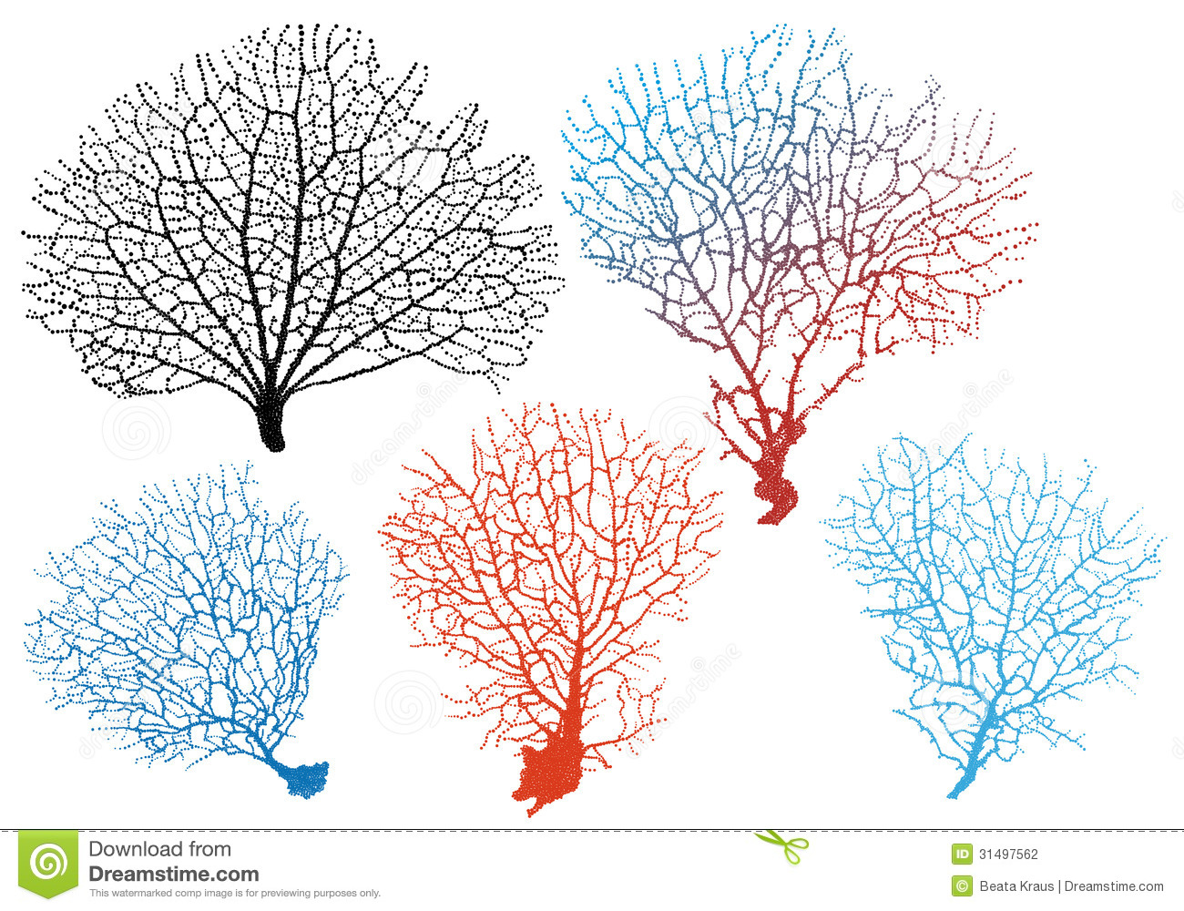 Sea Fan Corals, Vector Set Stock Photography - Image: 31497562