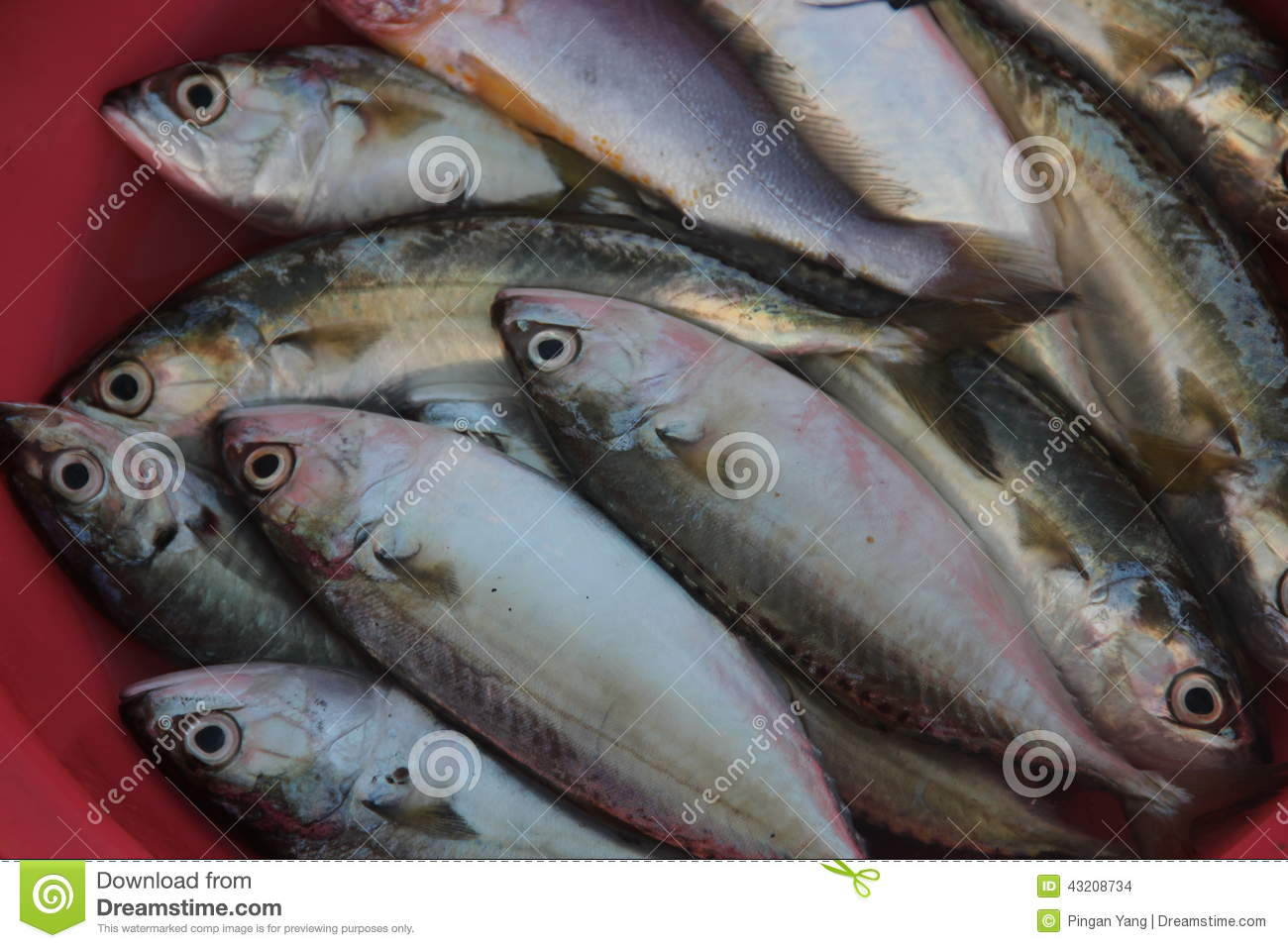 the sea fish stock photo image of acids natural food